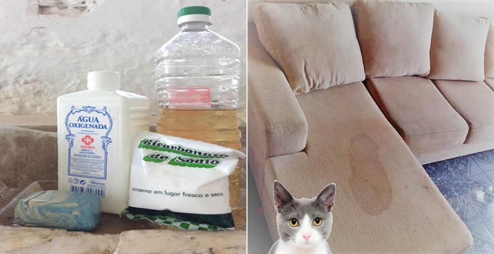 So entfernen Sie den Geruch von Katzenurin