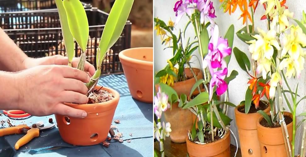 Comment planter des orchidées