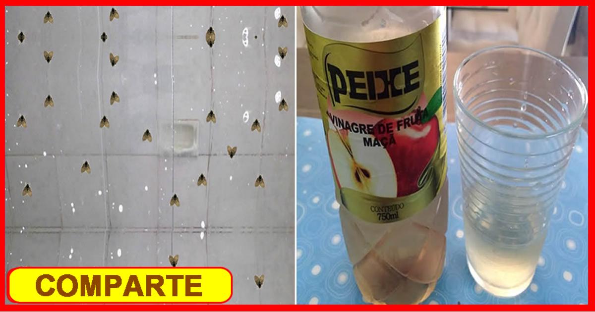 Cómo Eliminar El Mosquito De Baño De Una Vez Por Todas